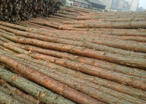松木桩价格
